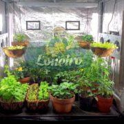 Lona Metalizada Produzir Refletiva Branca para Estufa Cultivo Cultivar Plantas Grow Indoor Outdoor Casa Jardim Loneiro Loja 300 Micras Polietieno Curitiba Paraná